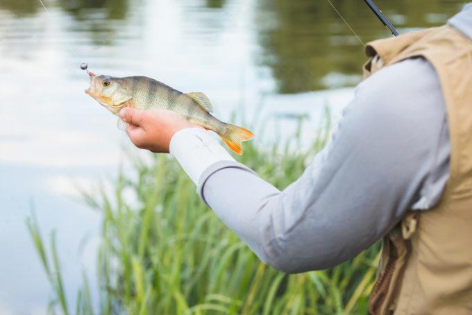 Ловля окуня на спиннинг летом: на что и как ловить летом на реке, приманки для ловли крупного экземпляра
