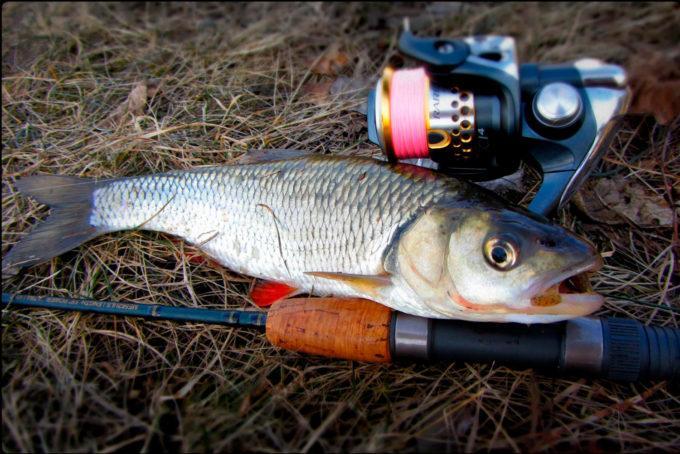 Какой длины выбрать спиннинг для береговой ловли