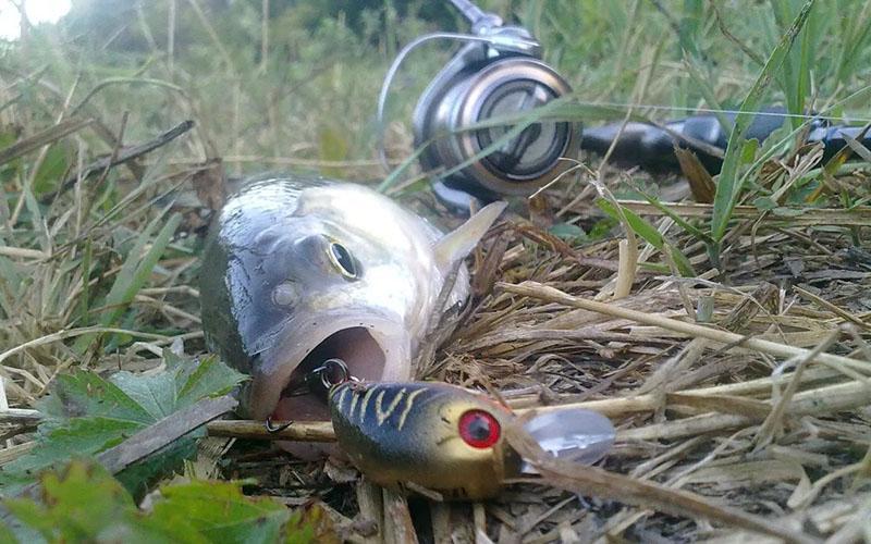 спиннинг для ловли жереха фото 1