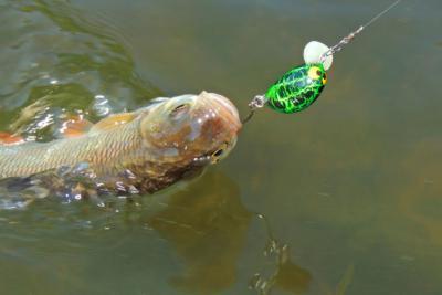 Ловля голавля весной различными способами