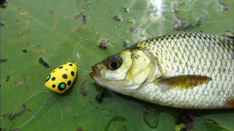 1. Рыбалка поплавочной удочкой