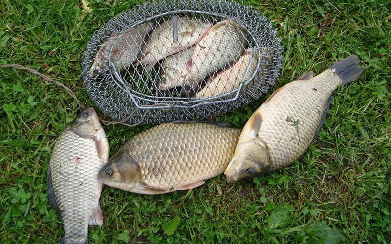Боковой кивок для летней рыбалки фото 3