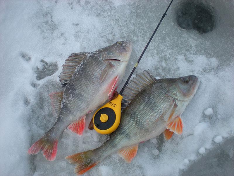 Рыболовная снасть балда фото 2
