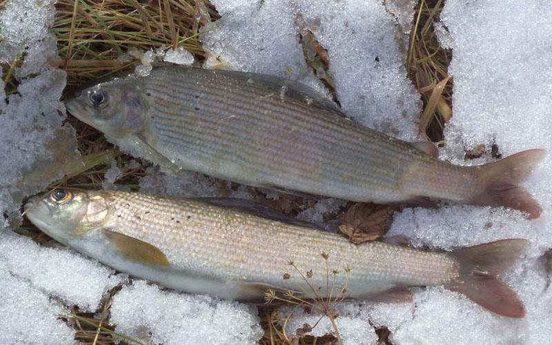 Рыболовная снасть балда фото 5