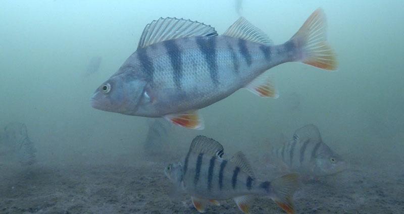Какое давление лучше для рыбалки зимой фото 2