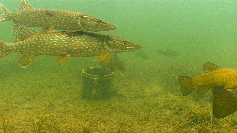 Какое давление лучше для рыбалки зимой фото 3