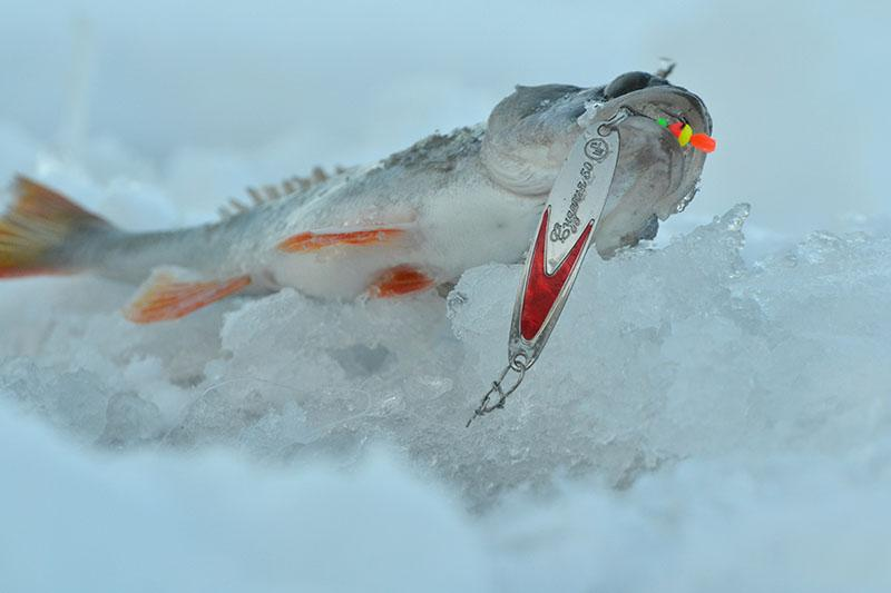 ловля окуня на блесну зимой фото 11