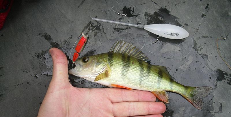 Бомбарда для рыбалки фото 4