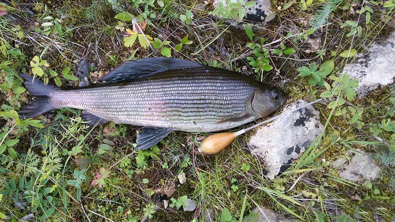 Бомбарда для рыбалки фото 5