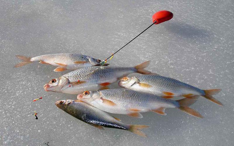 ловля на черта зимой фото 5