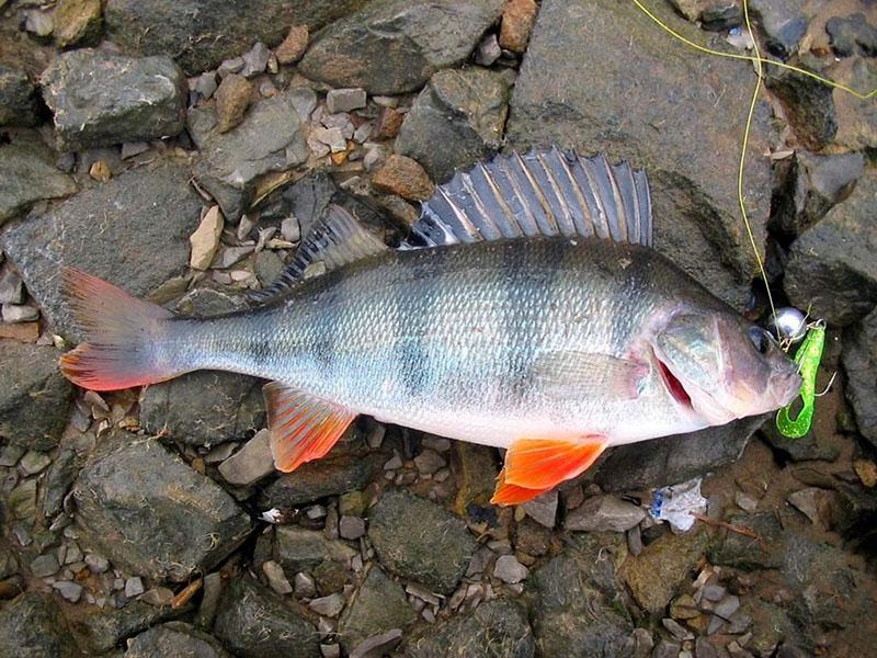 поводки для рыбалки фото 11