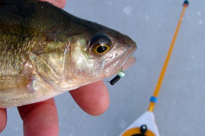 Лучшие мормышки на окуня - читайте на Сatcher.fish