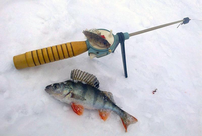 ловля окуня на мормышку зимой фото 1