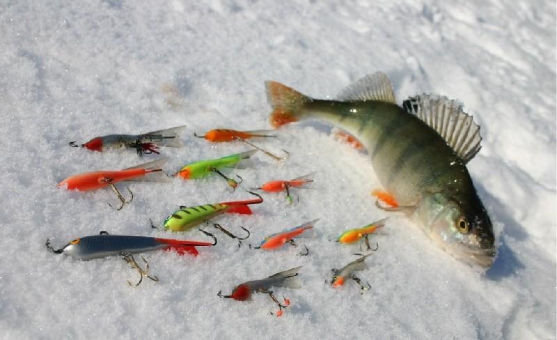 Ловля окуня по первому льду фото 3
