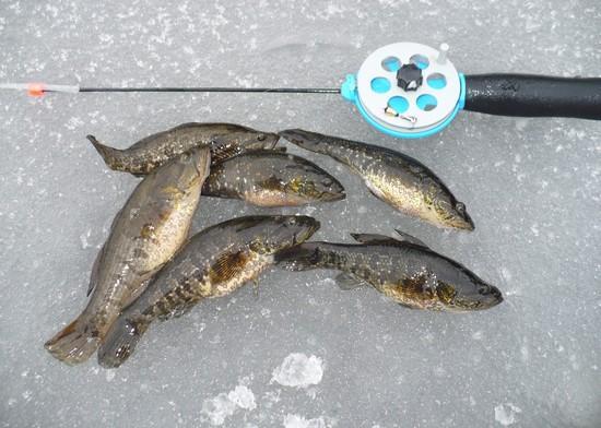 ловля ротана по первому льду фото 5