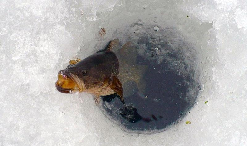 ловля ротана по первому льду фото 7