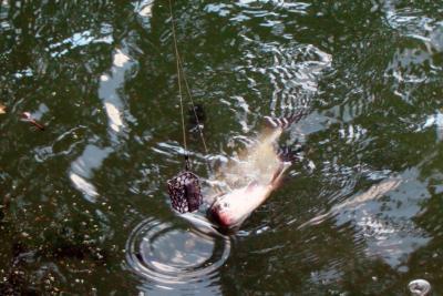 Фидерная оснастка на леща – верный путь к улову