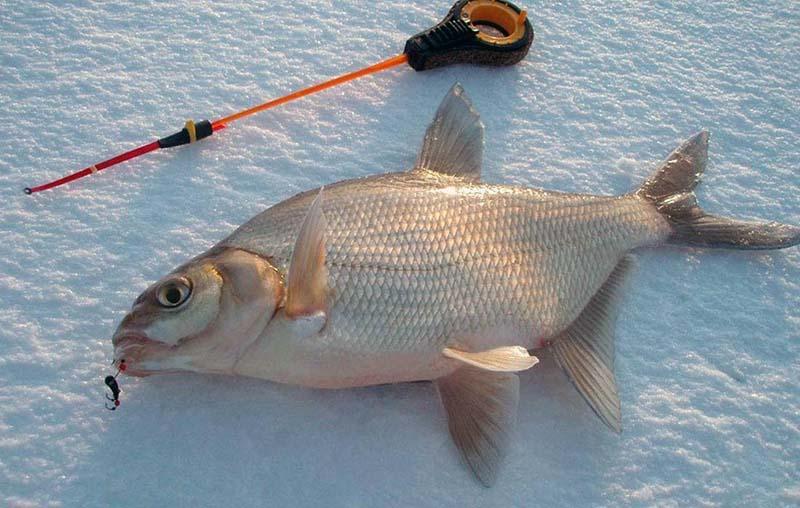ловля леща зимой фото 1