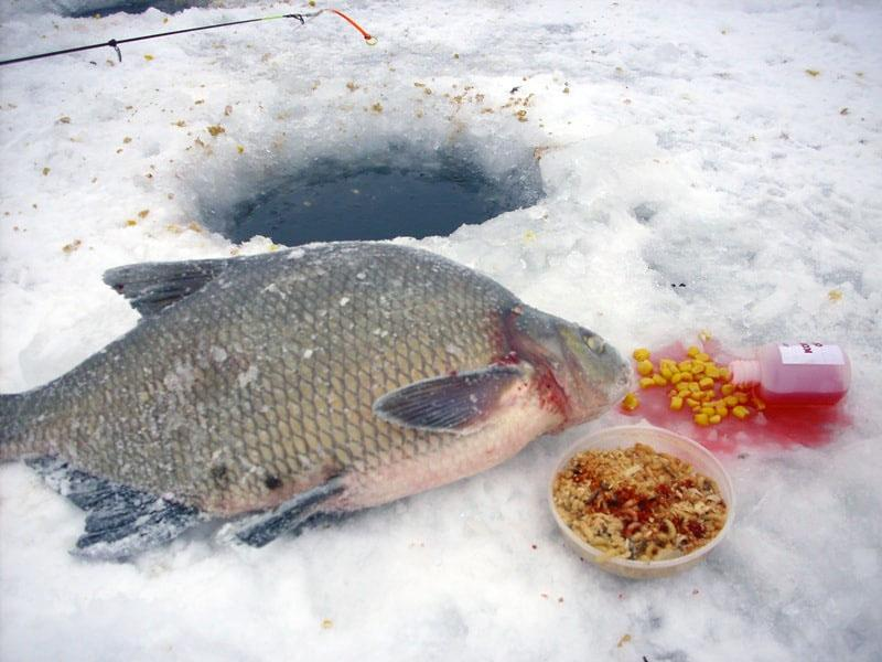 ловля леща зимой фото 4