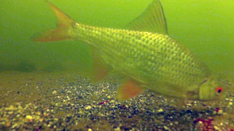 прикормка для рыбы фото 7