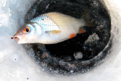 Подробный обзор ловли чебака на мормышку зимой: от выбора оснастки до поиска места
