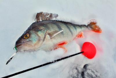 Польские зимние удочки и катушки Салмо (Salmo). Как выбрать подходящую для рыбалки?