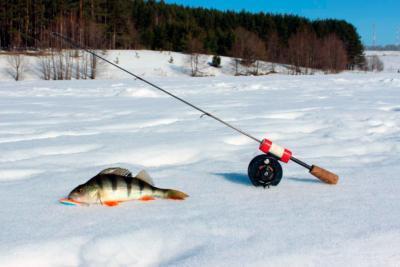 Как правильно выбрать зимнюю удочку для ловли на балансир и оснастить?