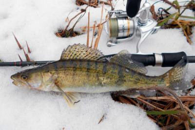 Как грамотно выбрать катушки для зимней рыбалки?