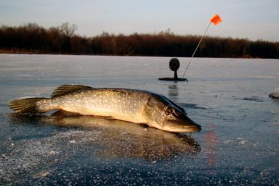 """Самый """"клевый"""" способ рыбалки на хищницу: ловля щуки зимой на флажки"""