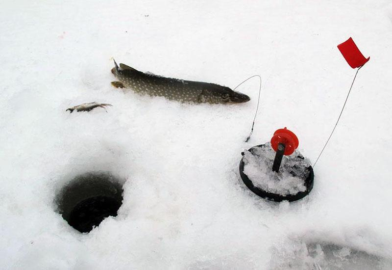 ловля щуки зимой на флажки фото 2
