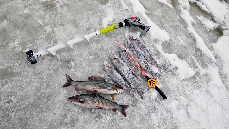 зимняя рыбалка на хариуса фото 2