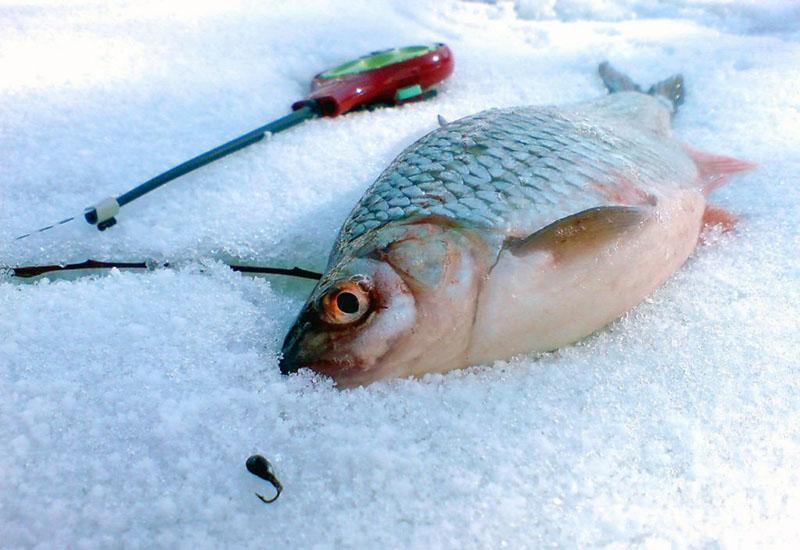 зимняя ловля плотвы фото 2