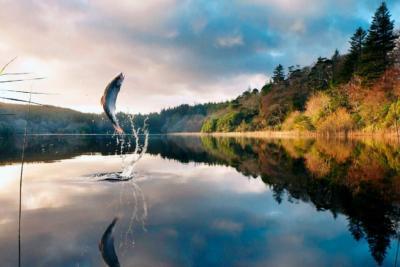 Все о летних снастях для рыбалки: от подбора и монтажа до нюансов закона о браконьерстве
