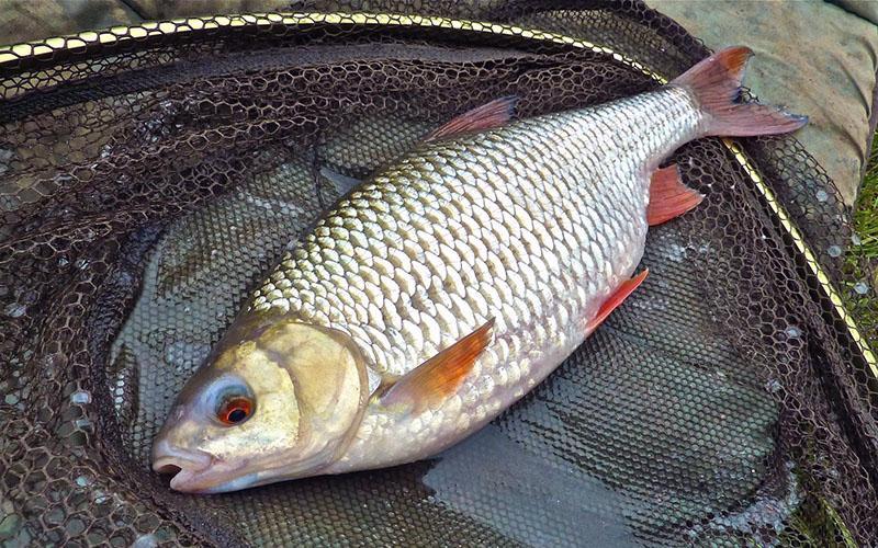 тесто для рыбалки фото 6