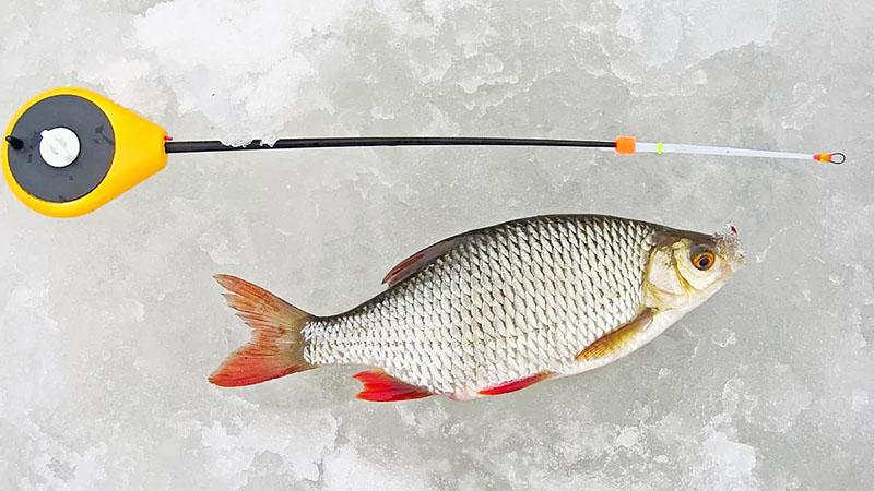 зимняя рыбалка фото 3