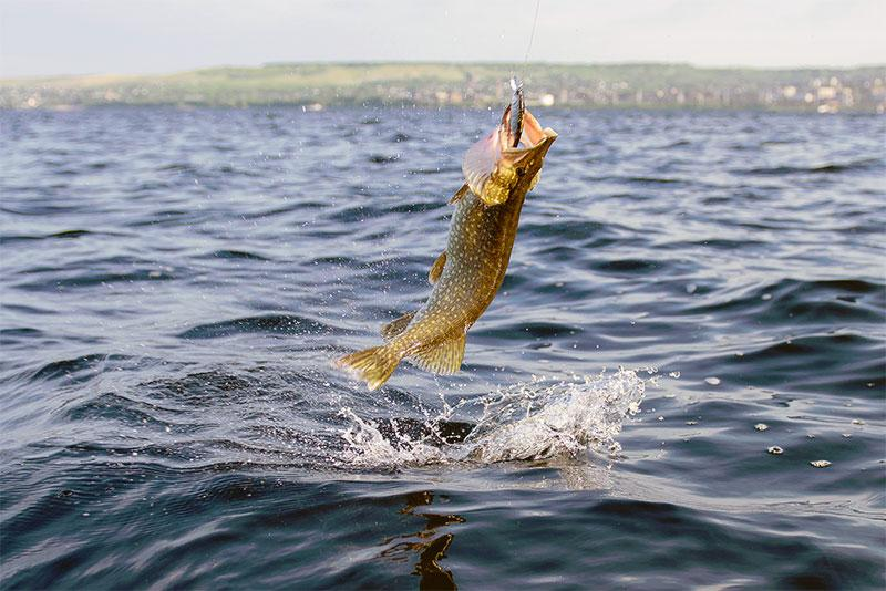 при каком давлении клюет рыба фото 2