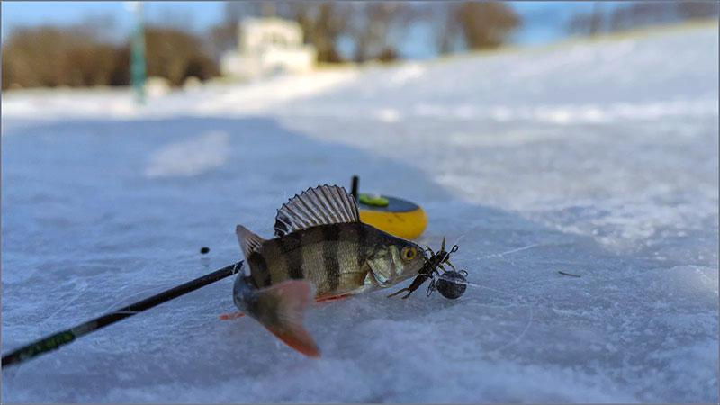 при каком давлении клюет рыба фото 3