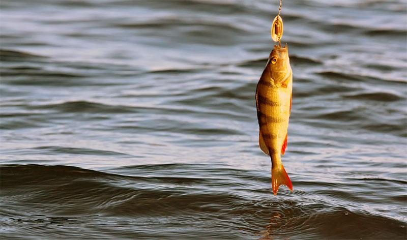 при каком давлении клюет рыба фото 6