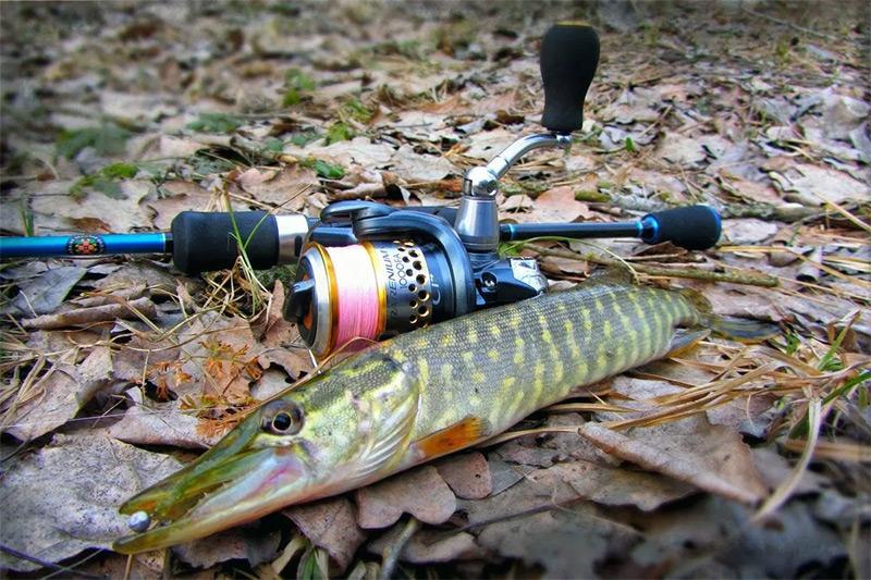 рыбалка на спиннинг весной фото 5