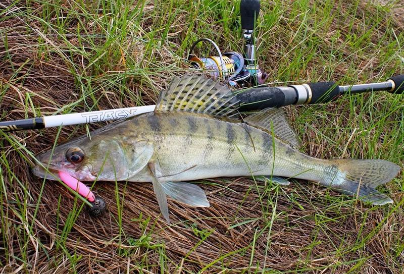 рыбалка на спиннинг весной фото 6