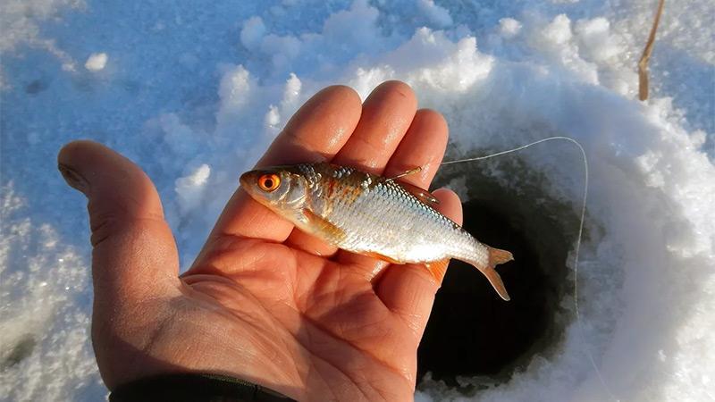 снасти для зимней рыбалки фото 2
