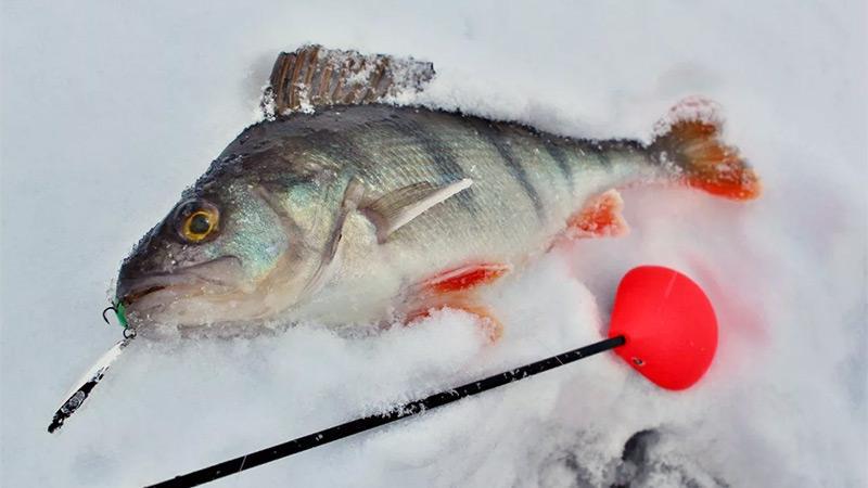 снасти для зимней рыбалки фото 3