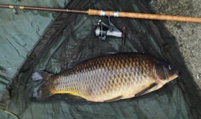 Разные способы ловли карпа: виды снастей и приманок для удачной рыбалки
