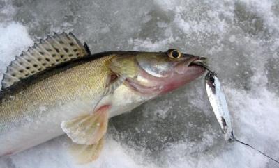 Все секреты и нюансы хорошей рыбалки по первому льду
