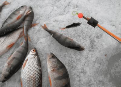 Как выбрать леску флюрокарбон для зимней рыбалки? Рейтинг лучших