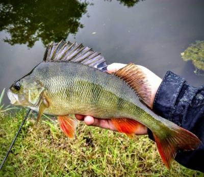 Что нужно для ловли окуня на джиг? Как рыбачить этим способом в разное время года?
