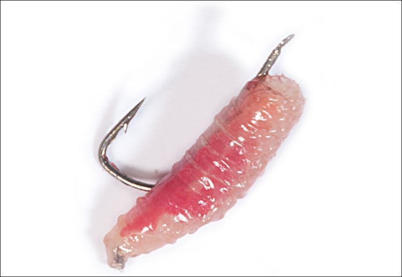 Особенности рыбалки зимой. Как насаживать опарыша на мормышку?
