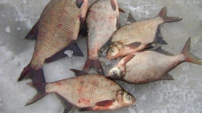 Удачная рыбалка — снасти, тактические приемы для ловли леща на течении зимой